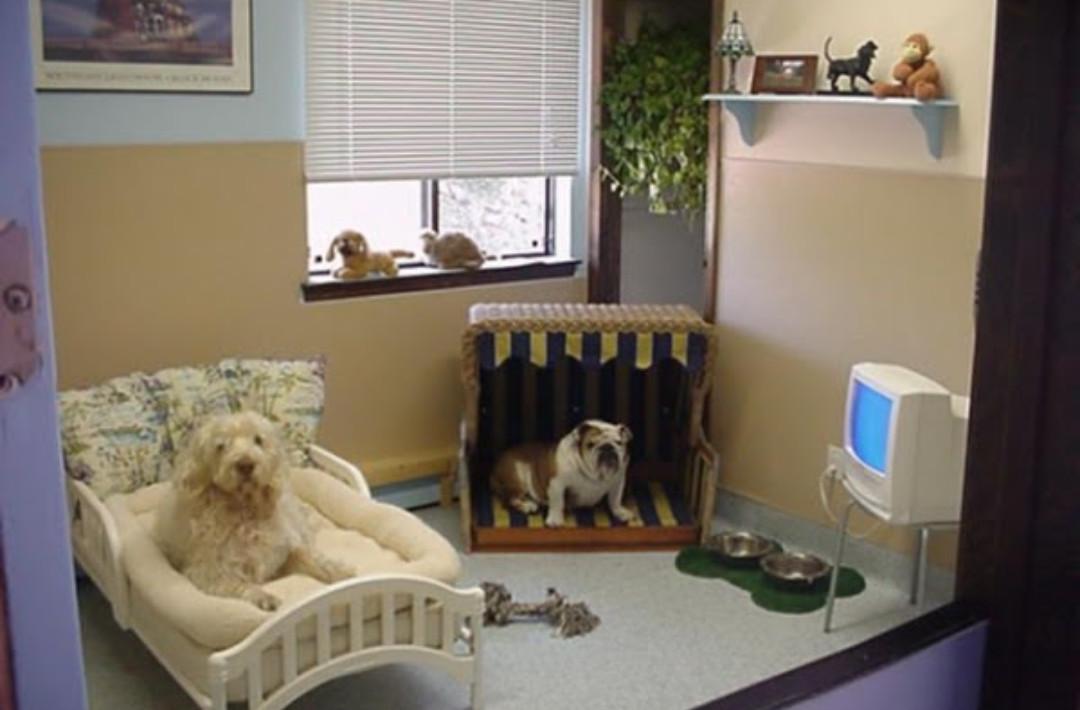 Man S Best Friend Dog Rooms Aston Bentley Interiors